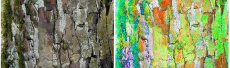 Elke Hickisch: Metamorphoses – In Dialogue with Tree Bark