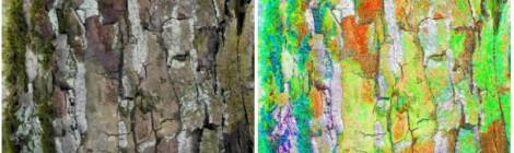 Elke Hickisch: Metamorphoses – In Dialogue with Tree Bark